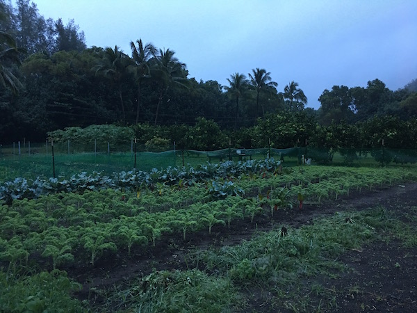 farm-hawaii- 27