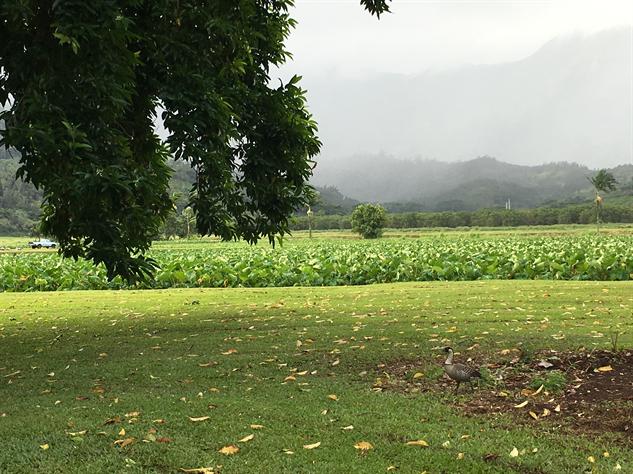 farm-hawaii- 6