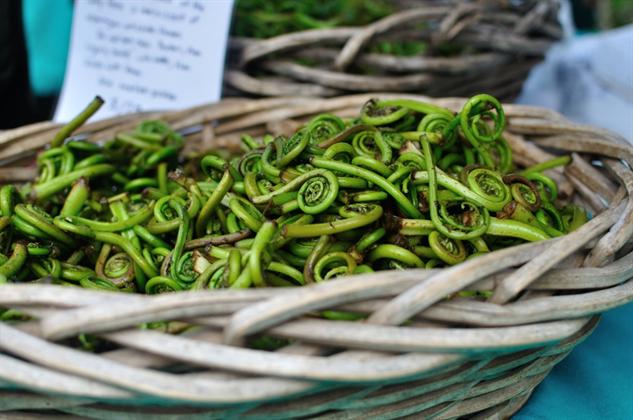 farmers-market-portland adfiddlehead-ferns-1000x664