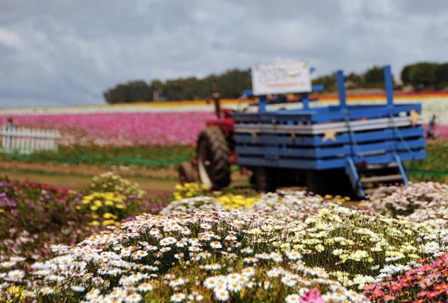 flower-tourism carlsbad
