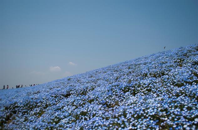 flower-tourism hitachi