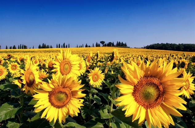 flower-tourism tuscany