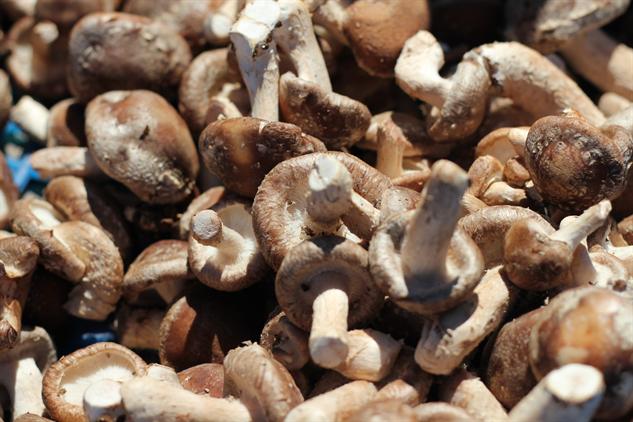 fm-fetish-arcata image-15-mushrooms