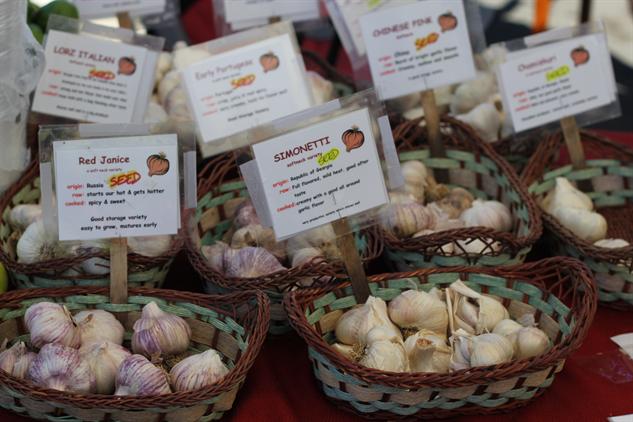 fm-fetish-arcata image-5-garlic