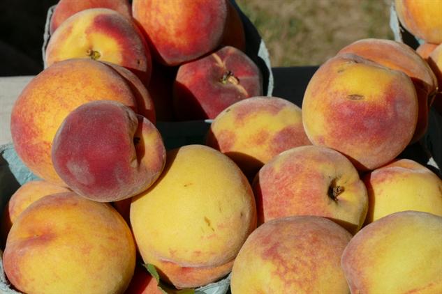 fm-fetish-bridgehampton 18---davis-peach-farm-1000x667