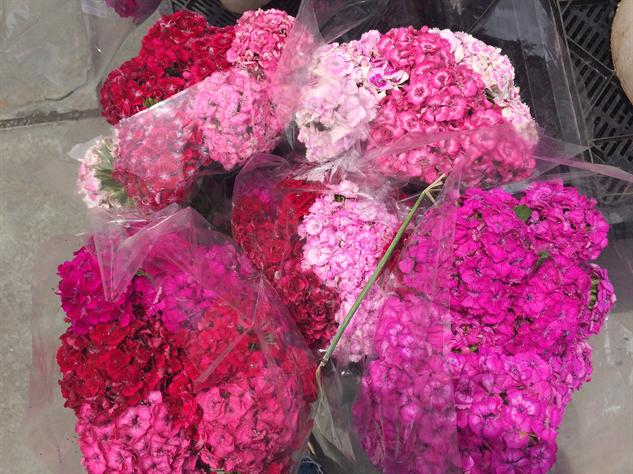 fm-fetish-brooklyn pretty-flowers
