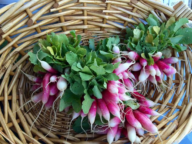 fm-fetish-richmond 10-radishes