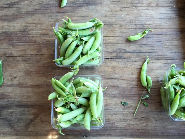 fm-fetish-richmond 14sugar-snap-peas