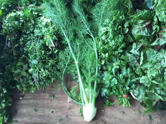 fm-fetish-richmond 6-fennel-and-herbs