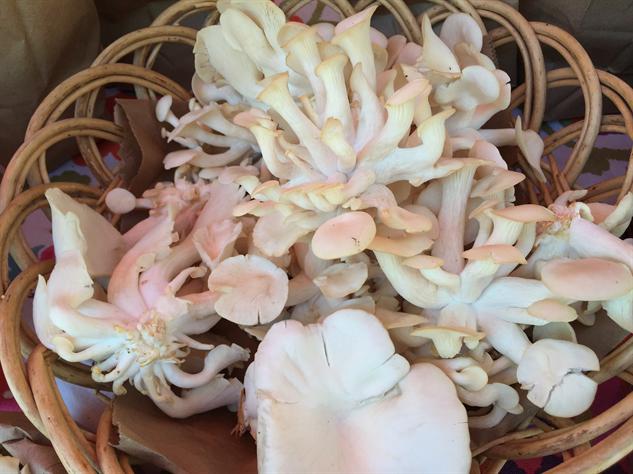 fm-fetish-richmond 8-mushrooms---oyster