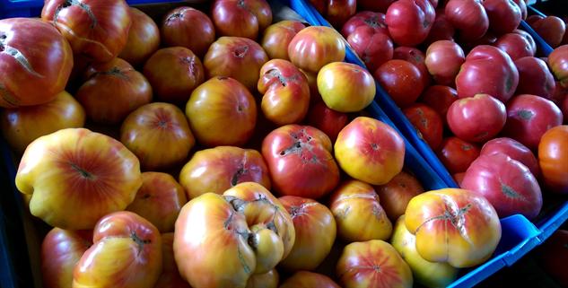 fm-fetish-sratoga gomez-tomato