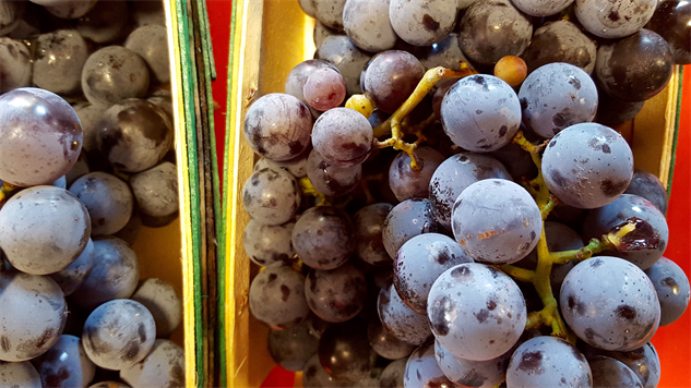 fmf-detroit 12-sanders-concord-grapes