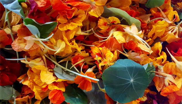 fmf-detroit 8-brother-nature-nasturtium