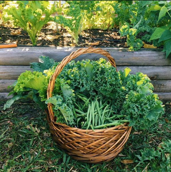 garden-gallery 4-april-paste-food-gallery-instagallery-gardens-kaylee-marie
