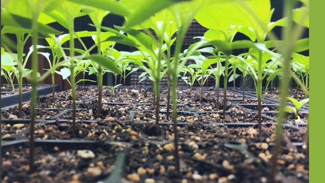 garden-gallery 9-april-paste-food-gallery-instagallery-gardens-bigshadowfar