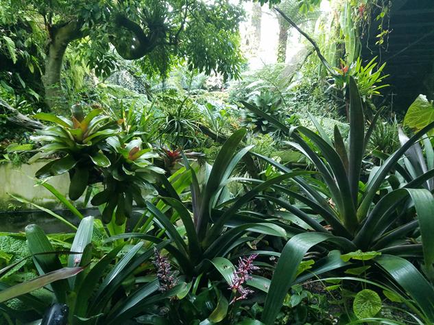 gardens-by-the-bay secretgarden