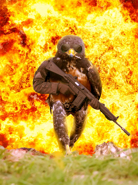 hawk-photoshop-battle cool-hawks-dont-look-at-explosions