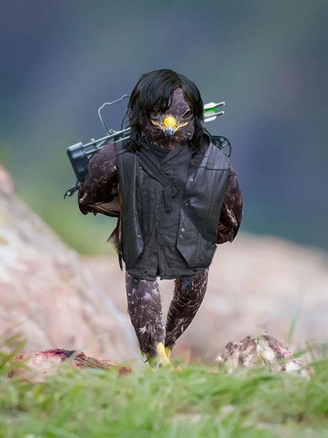 hawk-photoshop-battle darryl-hawk