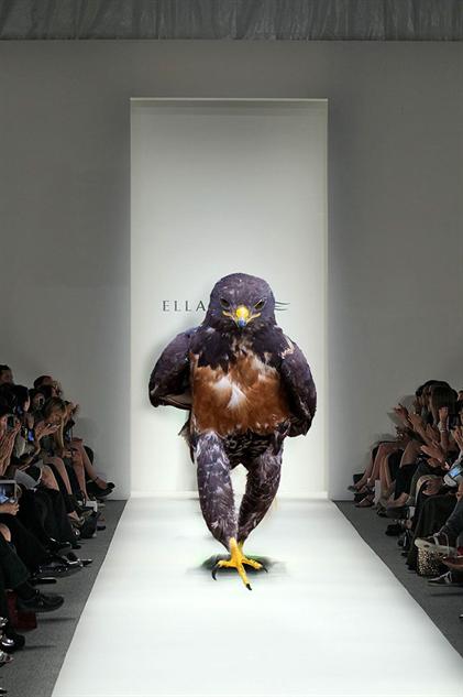 hawk-photoshop-battle hawk-model
