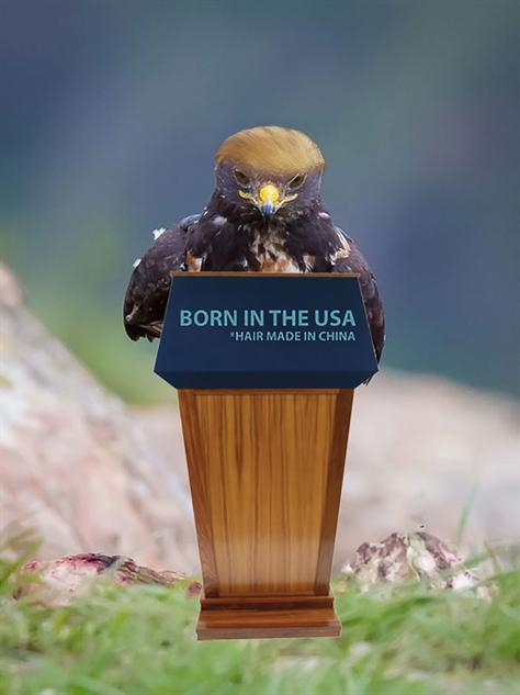 hawk-photoshop-battle hawk-trump