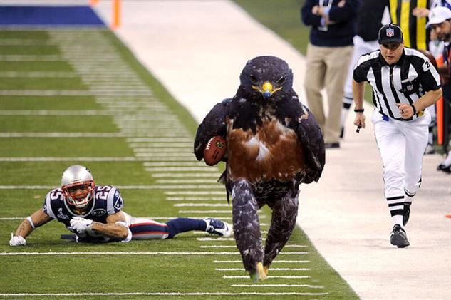 hawk-photoshop-battle hawkball