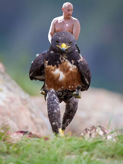 hawk-photoshop-battle vlad-hawk