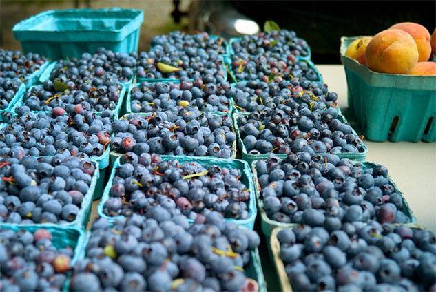 july-food-days 6-pick-blueberries