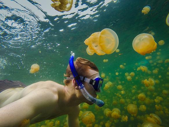 lakes jellyfish-lake-paluau-lakes