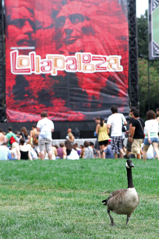 lollapalooza-2010 photo_4086_0