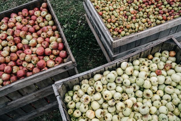 lost-apples shacks-apples-lots