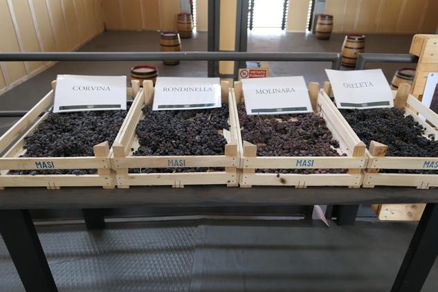 masi-winery p1000236