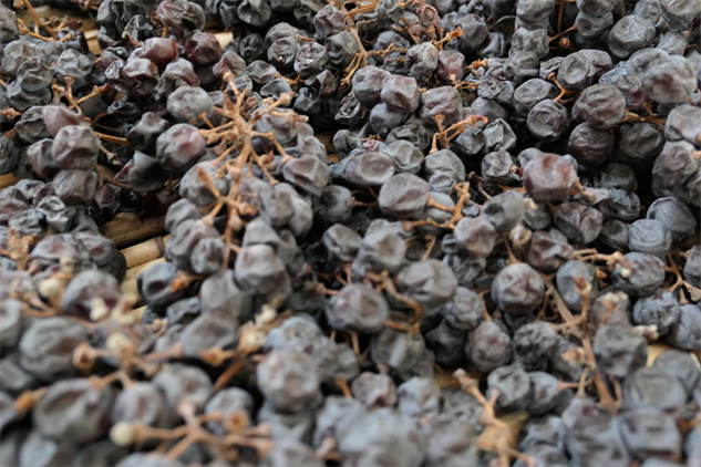 masi-winery p1000237