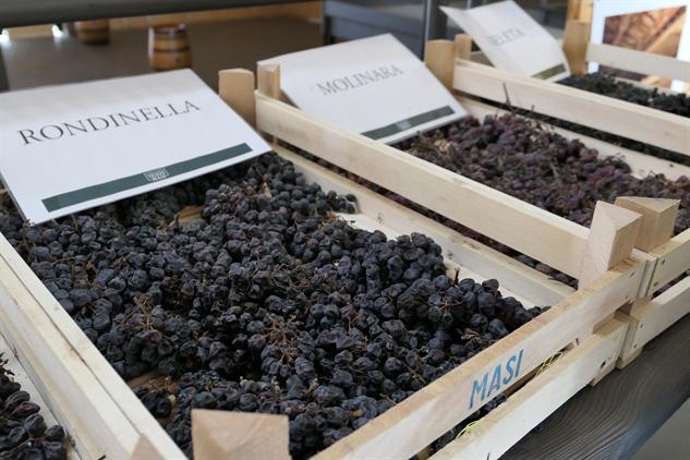 masi-winery p1000238
