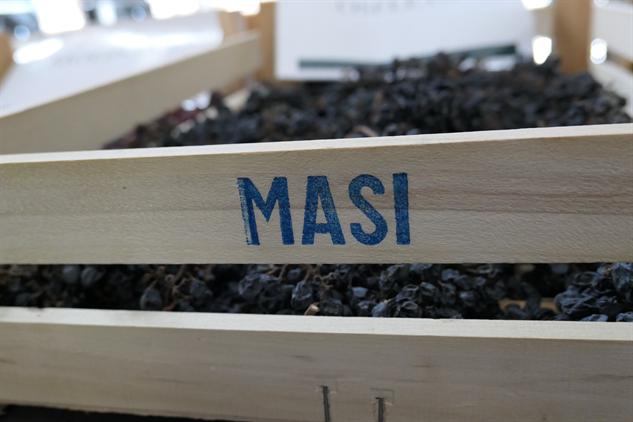 masi-winery p1000240