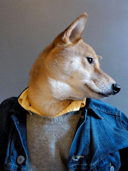 menswear-dog photo_17286_0