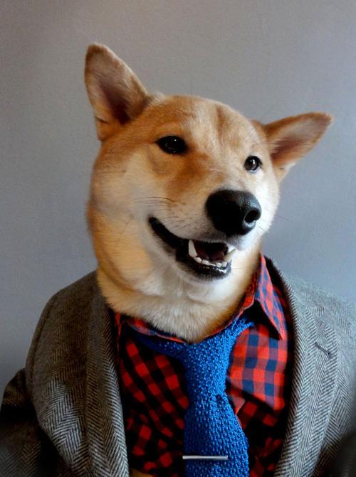 menswear-dog photo_17286_1