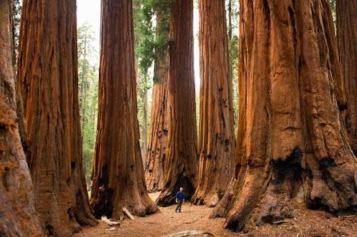 Americas National Parks California Travel Galleries Paste - National parks california