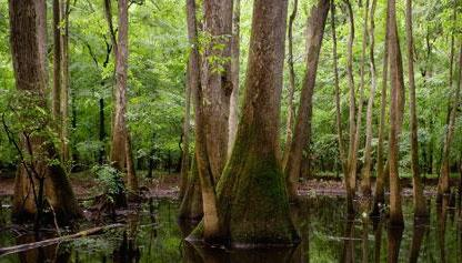 national-parks-south congaree