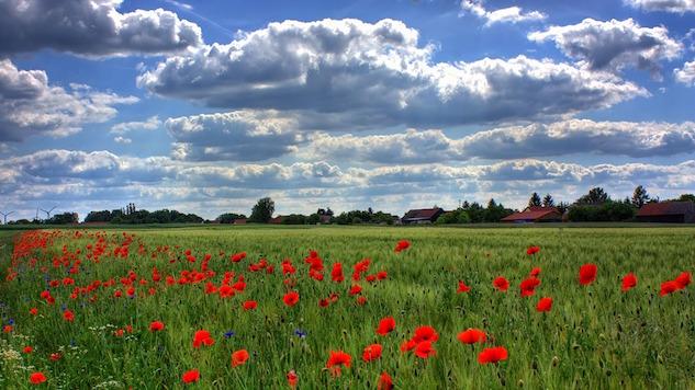 naturegal poppy-flowers