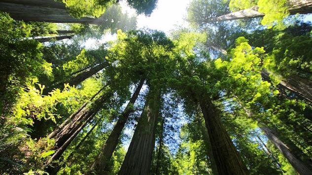 naturegal redwood