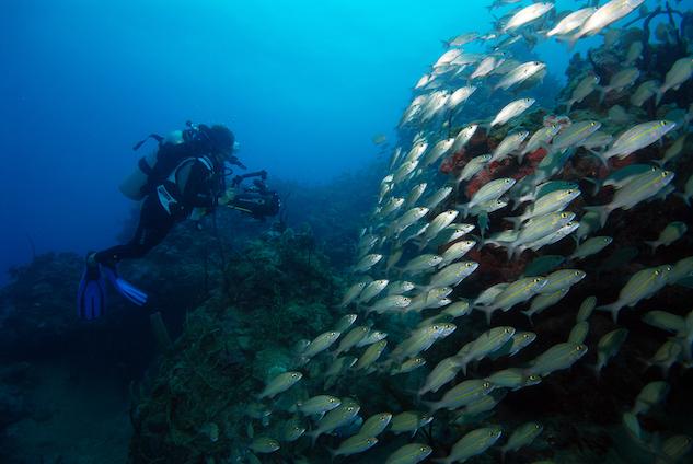 nevis-west-indies scuba-diving-off-nevis--credit-scuba-safari-nevis