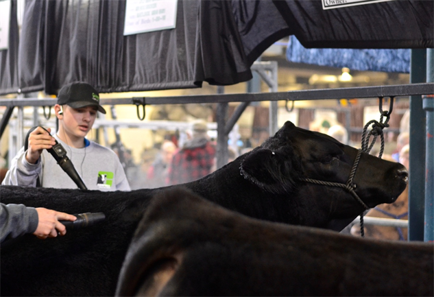 pa-farm-show cow-spa