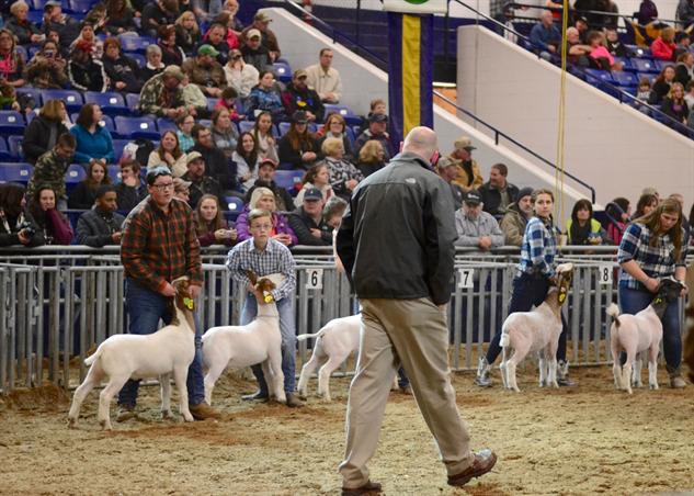 pa-farm-show goats