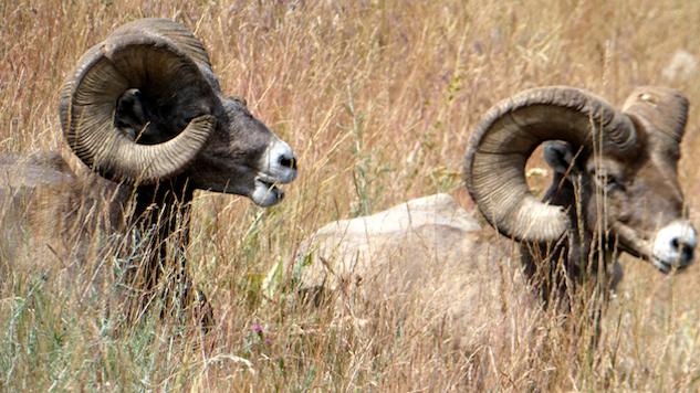 photo-tour-of-mt bison-range