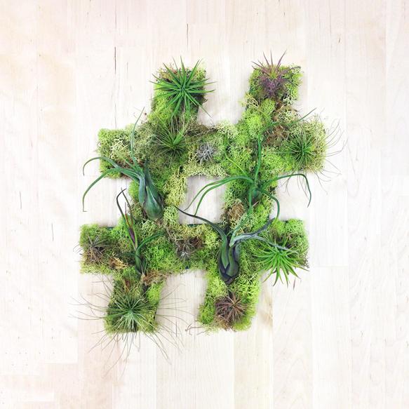 plantart plant-art3