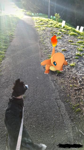pokemon-go-photos charmander-vs-pupper