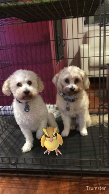 pokemon-go-photos dog-crate