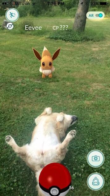 pokemon-go-photos eevee-retriever