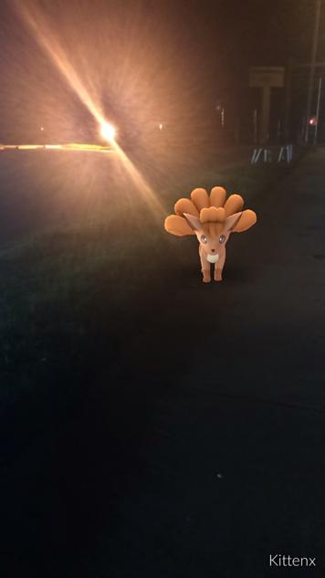 pokemon-go-photos fox-sun