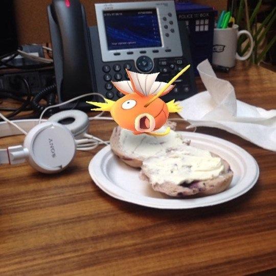 pokemon-go-photos magikarp-bagel